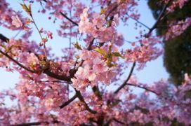 上野の不忍池でiPhone 5Sでタイムラプス撮影してみた