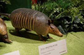 上野の国立科学博物館・大アマゾン展へ行って来た1