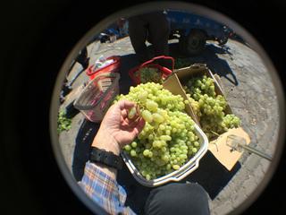 トルファン観光@大河沿鎮、超美味い葡萄