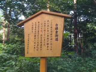 2008年の森林公園