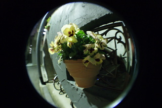 Lomo fisheye2、魚眼レンズで撮影した花の写真