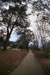 森林公園緑道