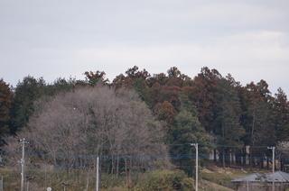 森林公園、滑川町