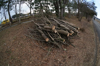 森林公園緑道、滑川町の薪