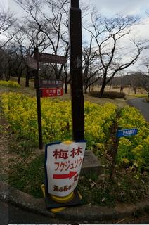 武蔵丘陵森林公園、梅林への道