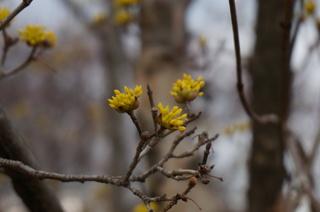 武蔵丘陵森林公園の花
