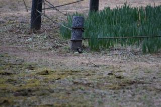 武蔵丘陵森林公園の鳥