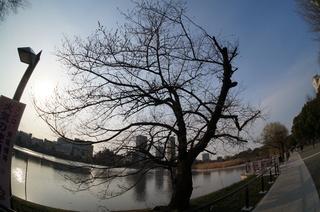 上野の不忍池を魚眼レンズで撮影