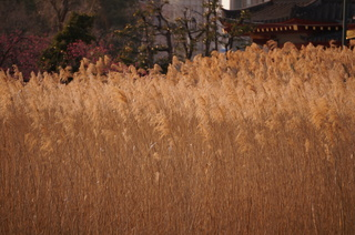 上野の不忍池