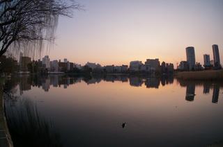 夕暮れ時の上野の不忍池