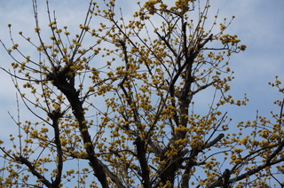 下赤塚~赤塚溜池公園へ続く道端の梅の花