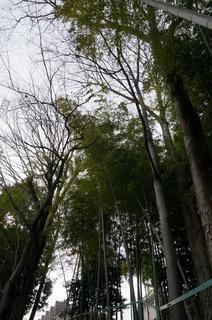 赤塚溜池公園付近の竹林