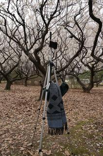 赤塚溜池公園で梅林をiPhone 5Sでタイムラプス撮影