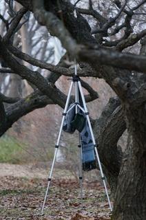 赤塚溜池公園で梅林と梅花をタイムラプス撮影