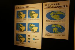 上野の国立科学博物館の大アマゾン展観覧@アマゾンの成立過程