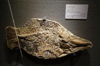国立科学博物館の大アマゾン展観覧@サンタナ層の魚類化石、イエマンジャ