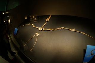 国立科学博物館の大アマゾン展観覧@サンタナ層の化石、アンハングエラ
