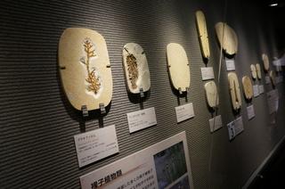 国立科学博物館の大アマゾン展観覧@クラト層の植物化石