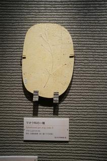 国立科学博物館の大アマゾン展観覧@クラト層の植物化石、マオウ科の一種