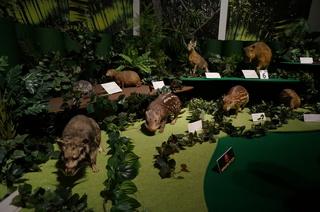 国立科学博物館の大アマゾン展観覧@アマゾンの哺乳類@南米で多様化したサル・ネズミ類