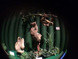 アマゾンの哺乳類@アマゾン起源のナマケモノ