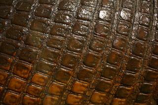 アマゾンの哺乳類@アマゾン起源のオオアルマジロ(Priodontes maximus)の表面の鱗