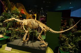 アマゾンの哺乳類@アマゾン起源のオオアリクイの骨格標本