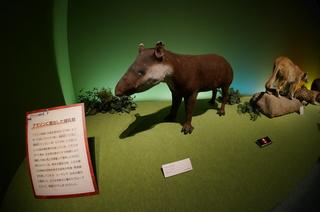アマゾンの哺乳類@アマゾンに進出した哺乳類、アメリカバク