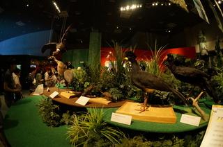 アマゾンの鳥類@アマゾン特有の鳥ブース周辺の風景