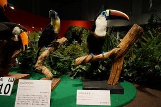 アマゾンの鳥類@アマゾン特有の鳥、ヒムネオオハシとシロムネオオハシ