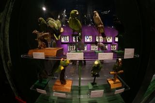 アマゾンの鳥類@アマゾン特有の鳥