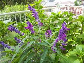 板橋区上板橋、前野町付近の公園の花