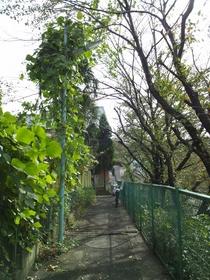 板橋区上板橋、前野町の公園付近