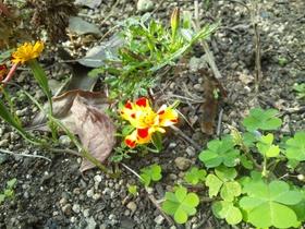 板橋区上板橋、前野町の公園の花