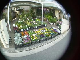 板橋区立エコポリスセンター前の花屋