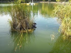 板橋区の見次公園の池