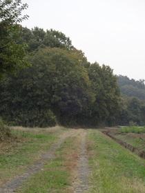 DSC-QX10で森林公園付近をテスト撮影